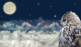 Uil bij volle maan Royalty-vrije Stock Afbeelding