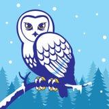 Uil in de wintertijd Royalty-vrije Stock Afbeelding