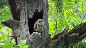 Uil die op de boom bij dierentuin neerstrijken stock footage