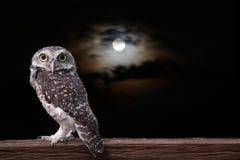 Uil en volle maan royalty-vrije stock foto's
