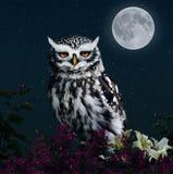 Uil in het licht van de maan stock illustratie