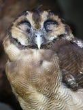 Uil in Kuala Lumpur Bird Park Stock Foto