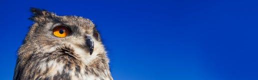 Uil met grote oranje ogen tegen een donkerblauwe hemel van de avondnacht royalty-vrije stock afbeeldingen