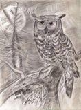Uil op een tak in hout Royalty-vrije Stock Afbeelding