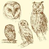 Uilen vector illustratie