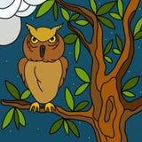 Uilen in de nacht Stock Afbeeldingen