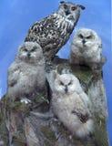 Uilfamilie - ouder en kuiken drie over blauwe hemel royalty-vrije stock afbeelding