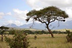 Uit Afrika Royalty-vrije Stock Fotografie