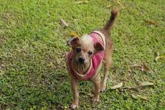 Uit nadruk van een onscherpe aanbiddelijke hond stock foto