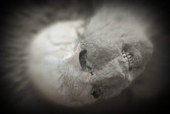 Uitbarstingsslachtoffer van de Vesuvius in Pompei Stock Afbeelding