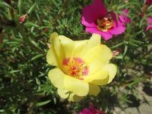 Uitdagendheid van gele bloem stock afbeeldingen