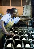 Uiteinde Hoogste Fabriek in Oeganda stock afbeelding