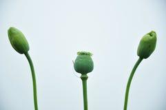 Uiteinde van Opium Royalty-vrije Stock Fotografie