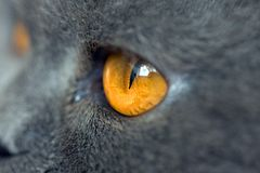 Uiterst close-up van kattenoog Stock Foto