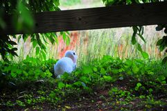 Uiterst klein Babykonijn - Bunny Sitting op Stro Stock Afbeelding