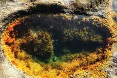 Uiterst klein ecosysteem dichtbij strand royalty-vrije stock foto's