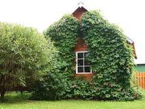 Uiterst klein huis dat met klimop wordt behandeld Stock Afbeeldingen