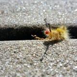 Uiterst klein insect Stock Afbeeldingen