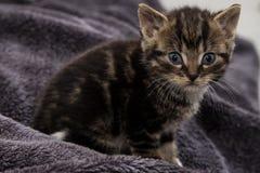 Uiterst klein katje Stock Afbeelding