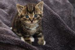 Uiterst klein katje Royalty-vrije Stock Afbeeldingen