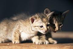 Uiterst klein katje die camera bekijken royalty-vrije stock foto