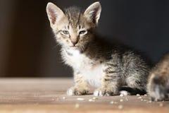 Uiterst klein katje die camera bekijken stock foto's