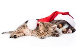 Uiterst klein katje en basset hondenpuppy in de rode slaap van de santahoed tog stock foto's