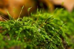 Uiterst klein mos op login het bos stock afbeeldingen