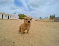 Uiterst klein puppy Stock Foto