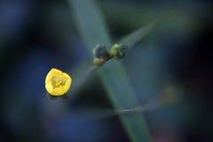 Uiterst kleine bloem op de donkere achtergrond van het bos Stock Fotografie