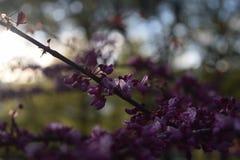 Uiterst kleine Bloemen die in de lente bloeien stock foto's