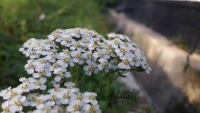 Uiterst kleine bloemen in witte bloemblaadjes stock foto's