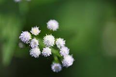 Uiterst kleine bosbloemen Stock Foto