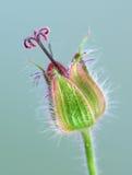 Uiterst kleine breekbare bloem Royalty-vrije Stock Afbeeldingen
