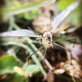 Uiterst kleine gestripte het vliegen insectmacro royalty-vrije stock afbeelding