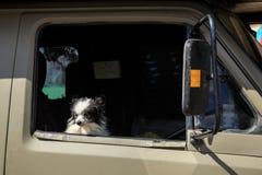 Uiterst kleine hond die uit een open voertuigvenster turen stock fotografie