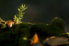 Uiterst kleine installaties op mos in zonneschijn royalty-vrije stock fotografie