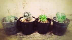 Uiterst kleine kleine cactuspotten Stock Afbeelding