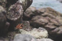 Uiterst kleine krabbaby onder rotsen op strand royalty-vrije stock foto's