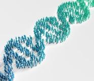 Uiterst kleine mensen die een DNA-schroef vormen Stock Foto