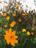 Uiterst kleine mooie gele bloemen die in het bos bloeien stock fotografie