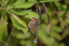 Uiterst kleine mooie vlinder Royalty-vrije Stock Fotografie