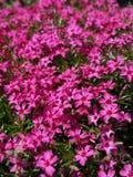 Uiterst kleine purpere bloemen royalty-vrije stock fotografie