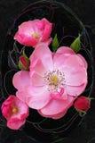Uiterst kleine rosebud opent Royalty-vrije Stock Fotografie