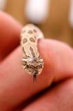Uiterst kleine slang Stock Afbeeldingen
