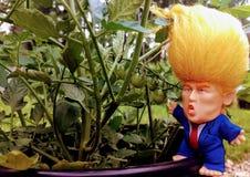 Uiterst kleine Troef in zijn tuin Royalty-vrije Stock Afbeeldingen
