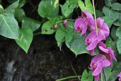 Uiterst kleine Violet Orchids Stock Foto's