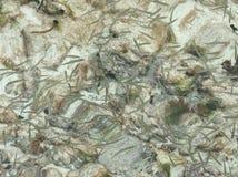 Uiterst kleine vissen Royalty-vrije Stock Afbeeldingen