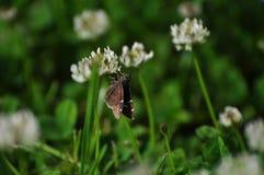 Uiterst kleine vlinder Royalty-vrije Stock Afbeelding
