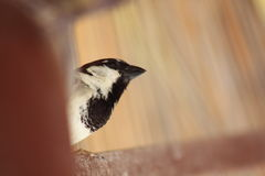 Uiterst kleine Vogel Royalty-vrije Stock Fotografie